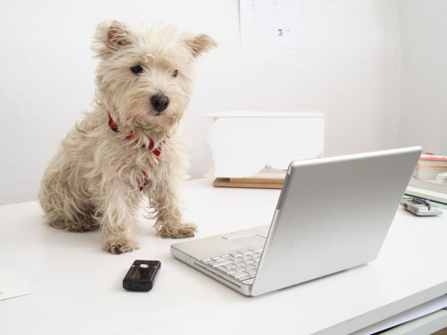 take-your-dog-to-work @DailyKatyBlog DailyKaty.com
