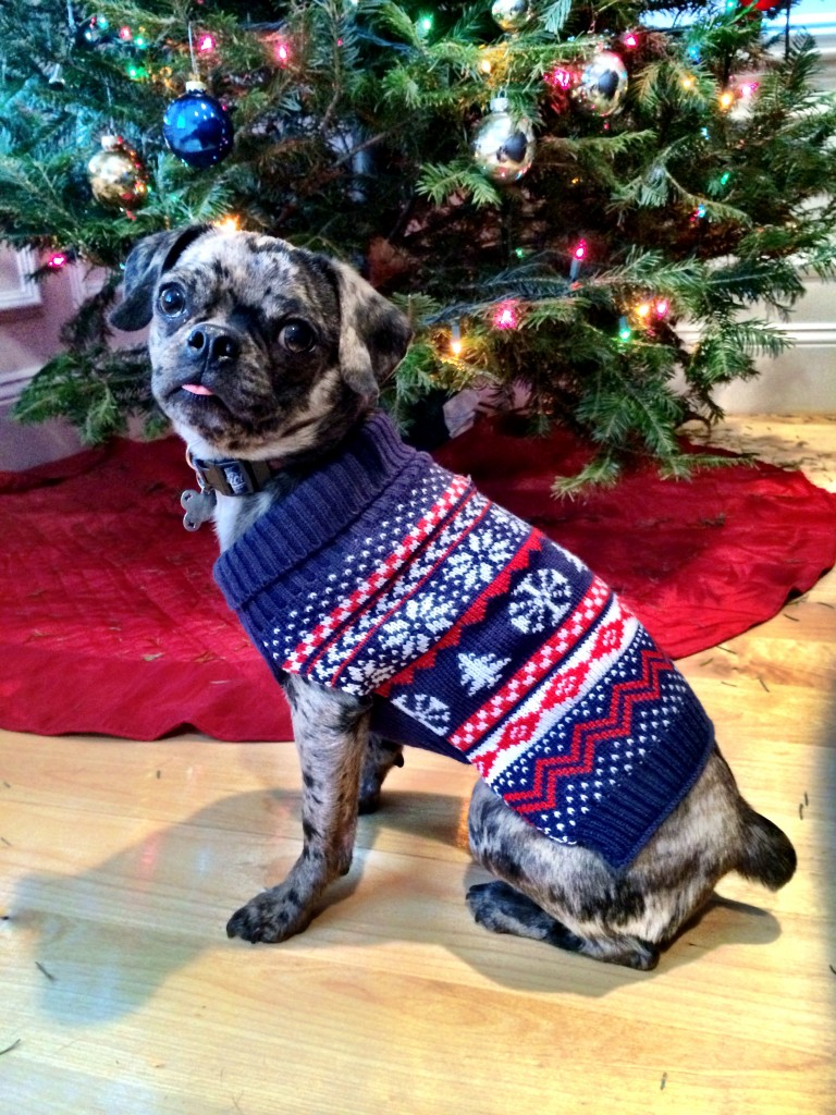 Holiday Dog Sweaters - more at http://bit.ly/dailykaty