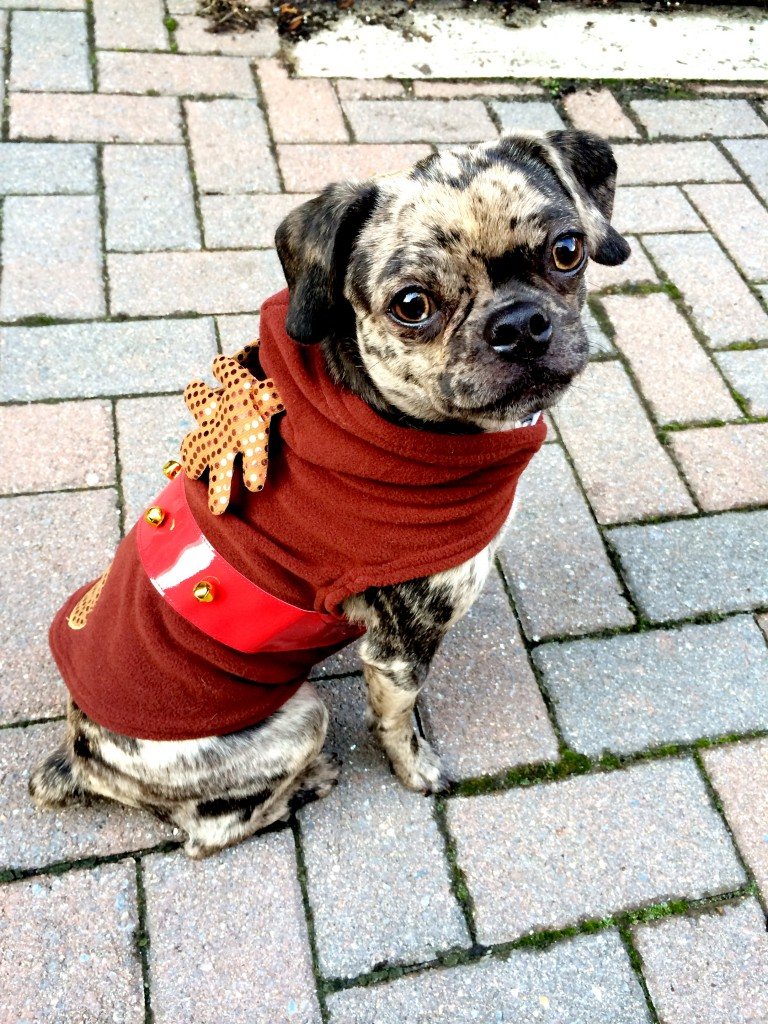 Xmas Dog Reindeer Costume {get the look at dailykaty.com}